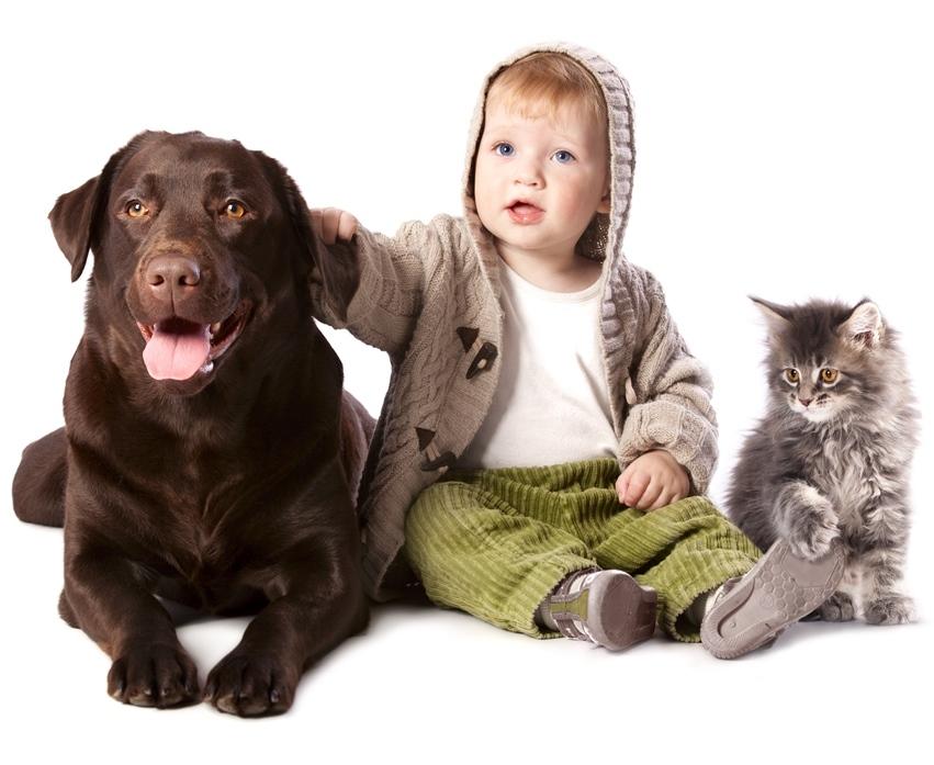 orsóféreg kutyáról emberre