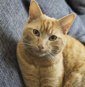 cat-2014327_1920