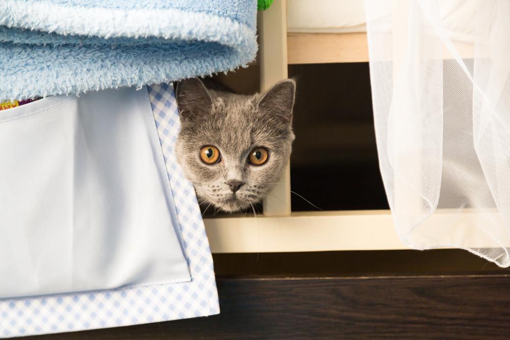Macska fekhely házilag