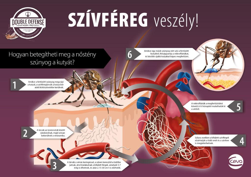 Dirofilárózis (szívférgesség, Heart Worm Disease)